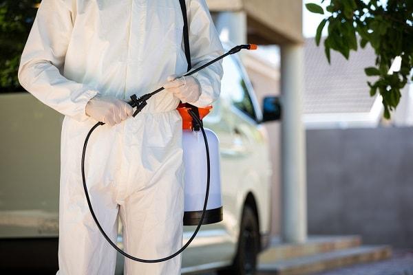 como acabar com formigas, como acabar com insetos, dedetização