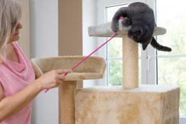 como fazer arranhador para gatos, como fazer um arranhador para gatos, como fazer arranhador para gatos caseiro, como fazer arranhador para gatos de papelão, como fazer arranhador para gatos passo a passo, artesanato com garrafas pet, brinquedor para gatas caseiro, brinquedo para gato com caixa de sapato