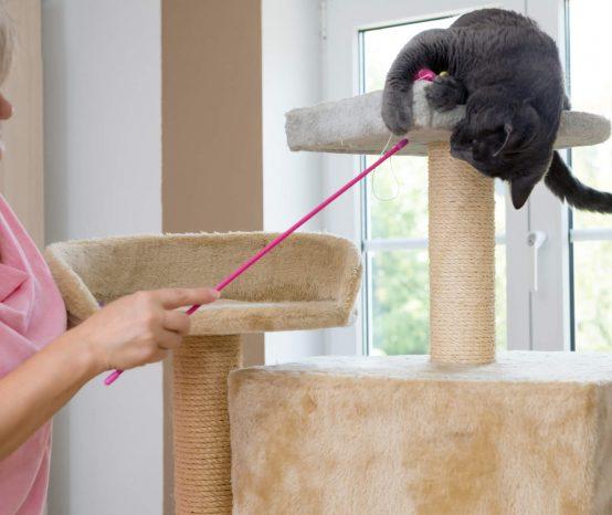 Como fazer arranhador para gatos: confira o passo a passo
