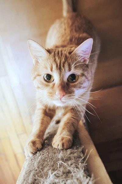 como fazer arranhador para gatos, como fazer um arranhador para gatos, como fazer arranhador para gatos caseiro, como fazer arranhador para gatos de papelão, como fazer arranhador para gatos passo a passo, artesanato com garrafas pet, brinquedos para gatos caseiro, brinquedo para gato com caixa de sapato