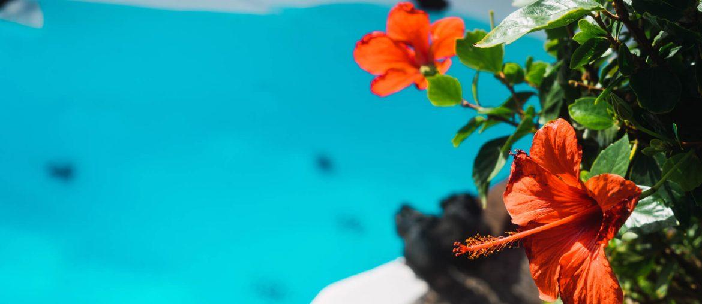 Paisagismo para piscina quais as plantas mais indicadas