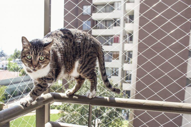 gato na sacada com tela de proteção