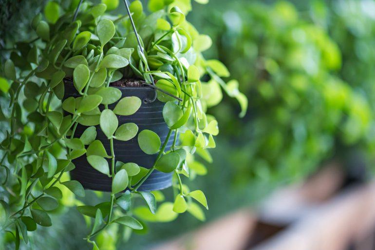 como fazer um jardim vertical, dicas jardim vertical