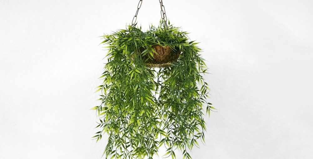 como fazer um jardim vertical, plantas para jardim vertical