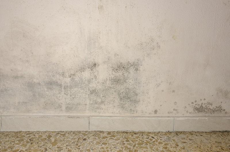 como tirar umidade da parede, como limpar mofo