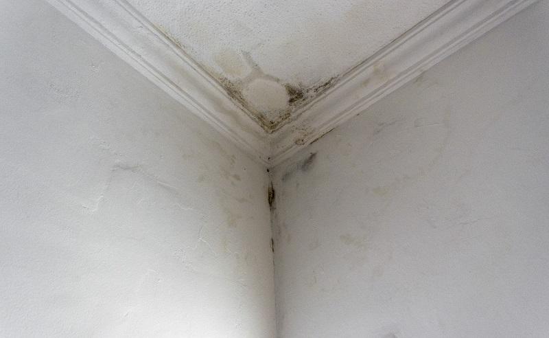como tirar umidade da parede, como acabar com mofo