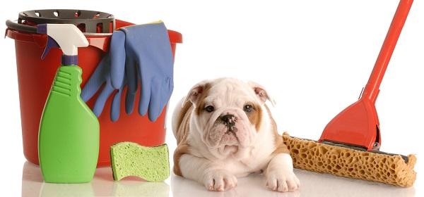 como tirar cheiro de xixi de cachorro, eliminar cheiro de urina