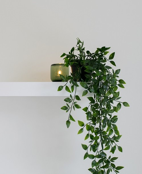 como umidificar o ar, plantas para umidificar o ar