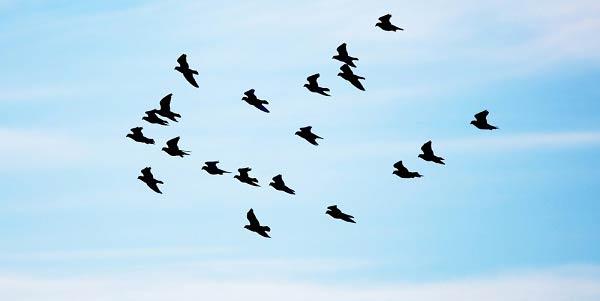 aeb670c98 Entenda os significados de sonhar com pássaros - Astrocentro Blog
