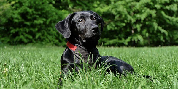 Entenda o significado de sonhar com cachorro preto - Astrocentro Blog 3abc46aeaa6