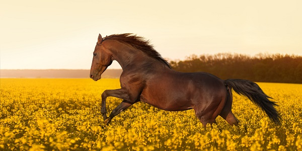 sonhos com cavalos