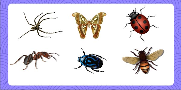 Sonhar com insetos
