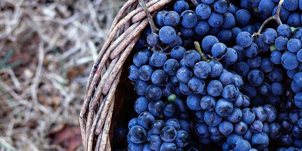 Simpatia da uva para o ano novo