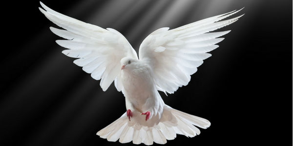 Significado da pomba da paz
