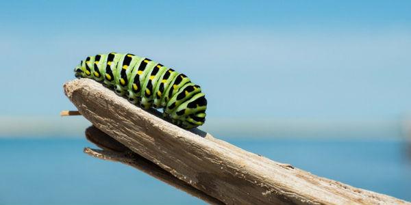 larvas-astrais
