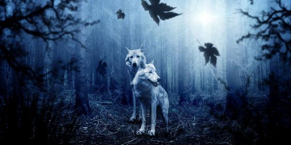 Animais místicos de cada signo