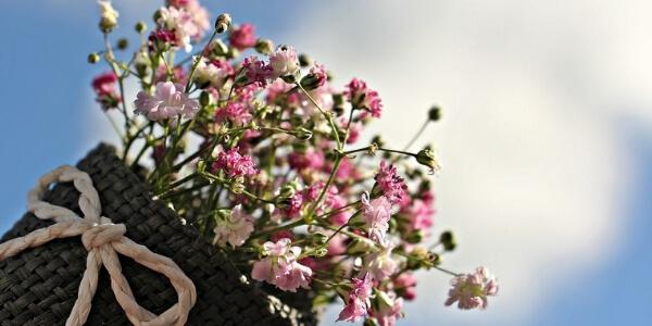 Flores de cada signo
