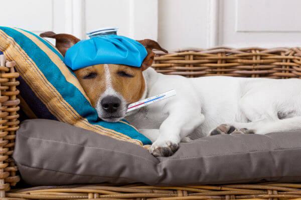 oração para cachorro doente