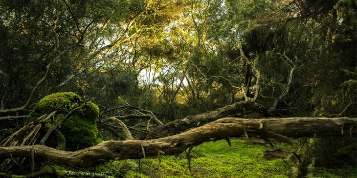 sonhar com floresta verde