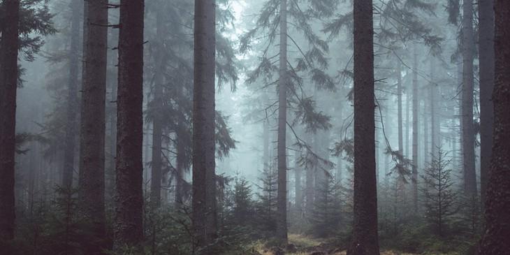 sonhar com floresta escura