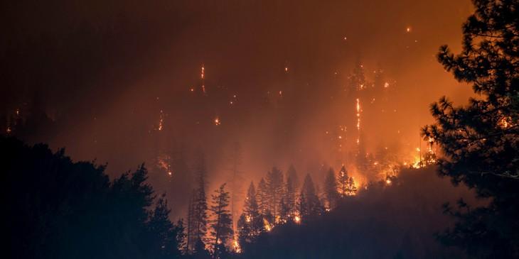 sonhar com incêndio na floresta