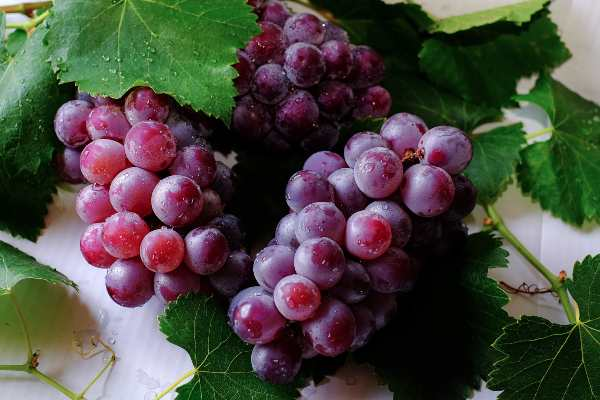 Simpatia da uva 2020