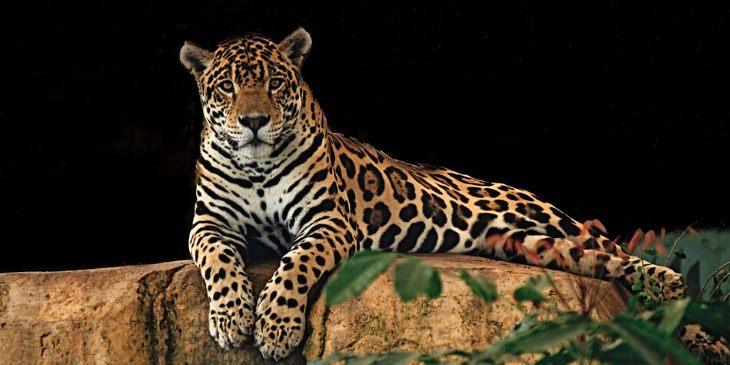 jaguar-horóscopo-maia-2020