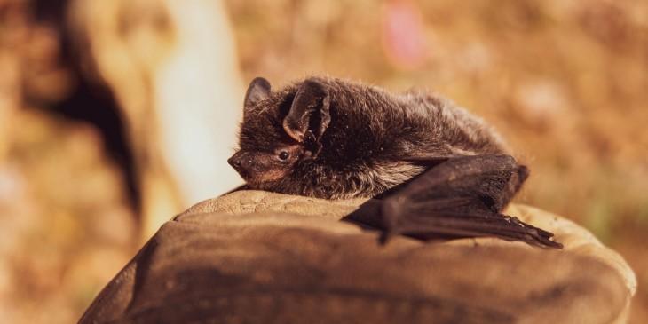 Morcego-horóscopo-maia-2020