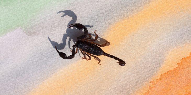 Escorpião-horóscopo-maia-2020