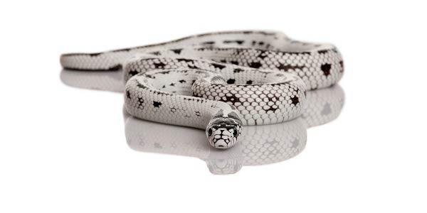 Soñar con serpiente blanca - ¿Qué significa  - Ayuda Mística 0b8557e95881
