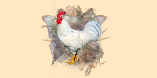 test de personalidad gallo