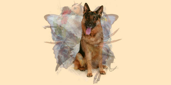 test de personalidad perro