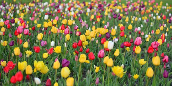 cómo funcionan las flores de bach