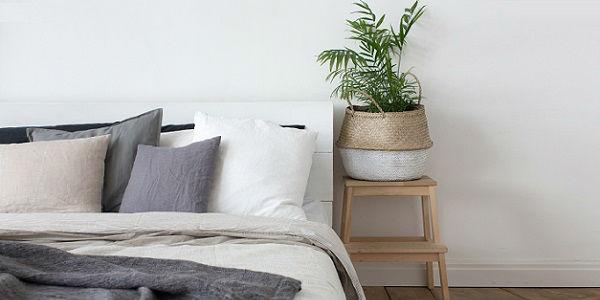 plantas en la habitación