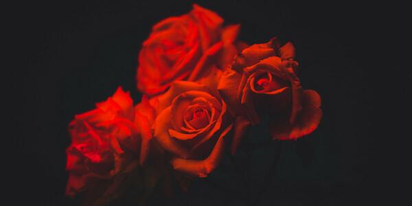 rituales de año nuevo para el amor