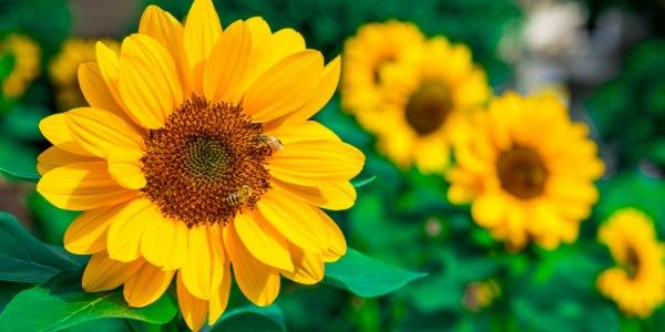 flor según tu signo
