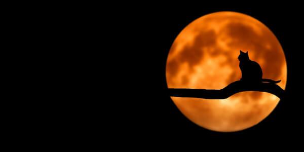 calendario solar y lunar