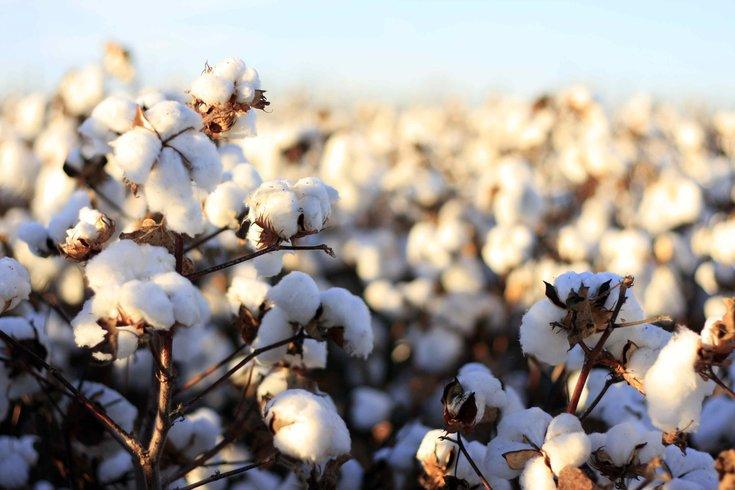 Cotton and Products Update: demanda por exportação lidera crescimento no setor. FAS estima que a área de algodão no Brasil no marketing year (MY) 2018/2019 alcançará 1.4 milhão de hectares, um aumento de 19% comparado com o MY do ano anterior.