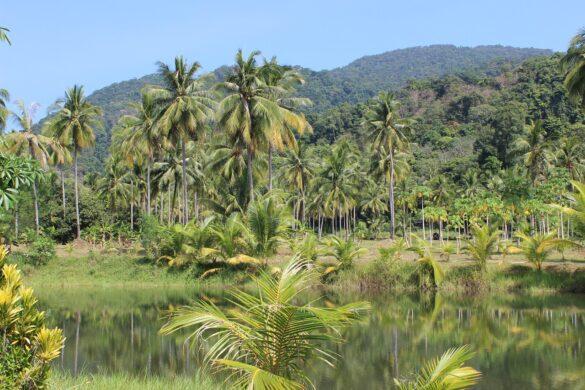 Imagem de uma floresta tropical: Local de diversas doenças endêmicas
