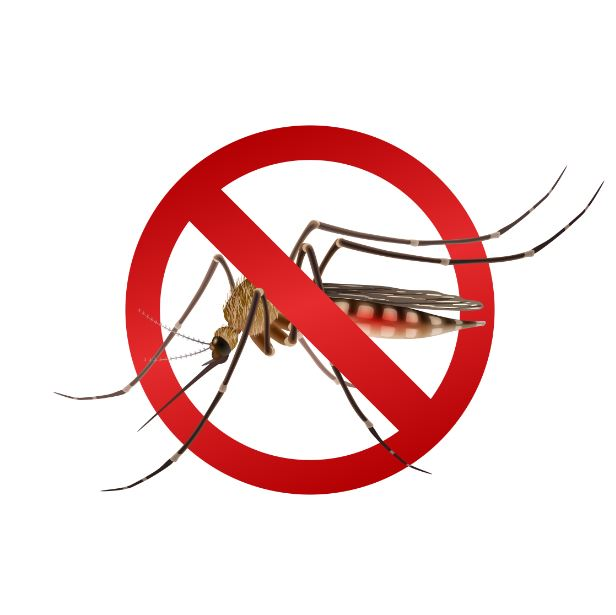 Mosquito Aedes aegypti: saiba as doenças que este mosquito pode transmitir!