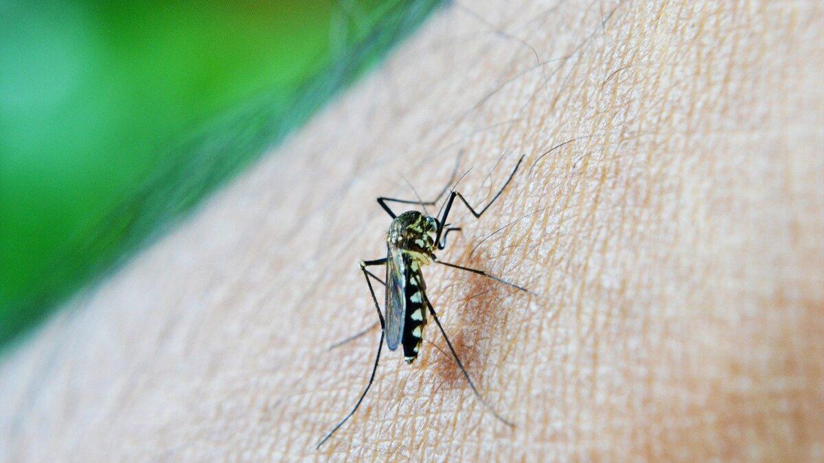 Prevenção da dengue: conheça as melhores maneiras de se proteger!