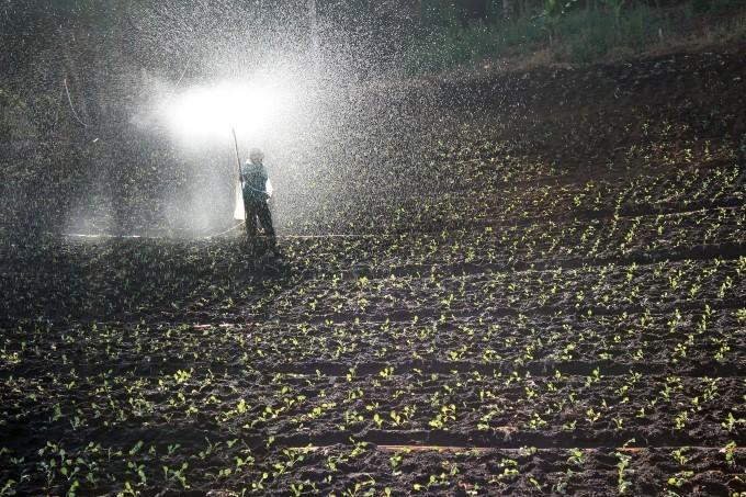 Demanda por fertilizantes no Brasil deve crescer 1,5% em 2020