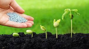 Momento é favorável para comprar fertilizantes garante Mosaic