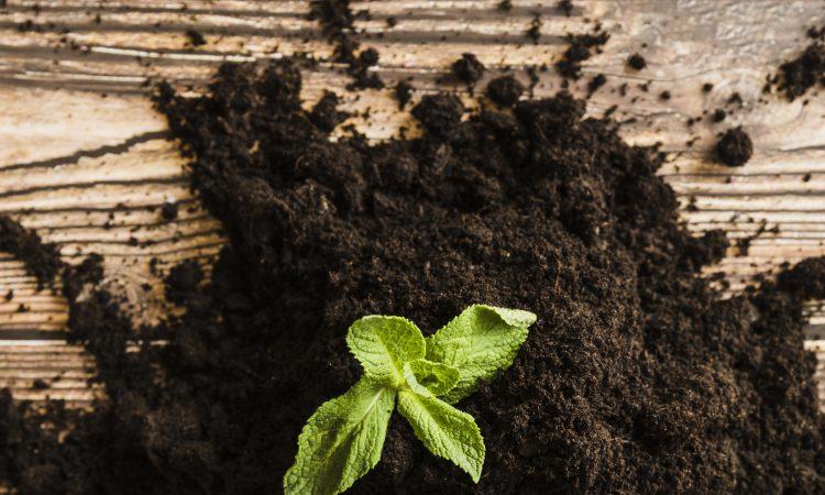Índia será autossuficiente em fertilizantes em 2023