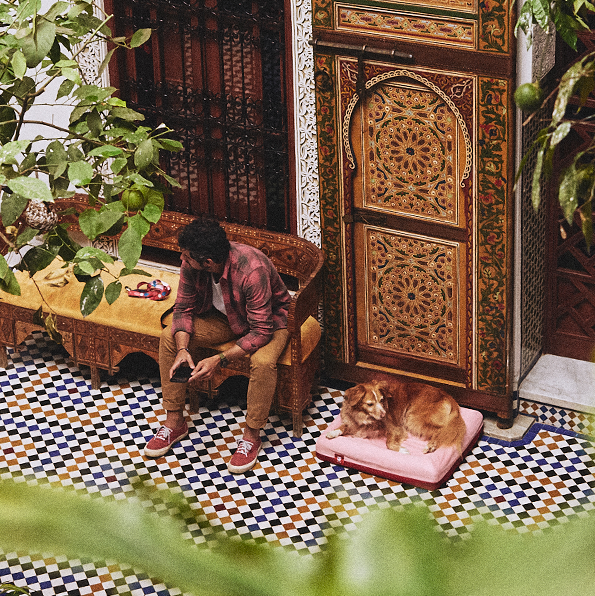 Marrakesh Collection | Zee.Dog
