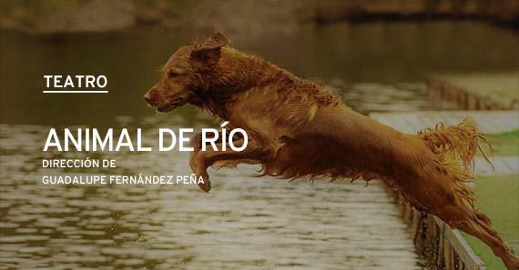 Animal De Río